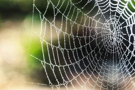 Spiders Web- Link to Research Networks Page